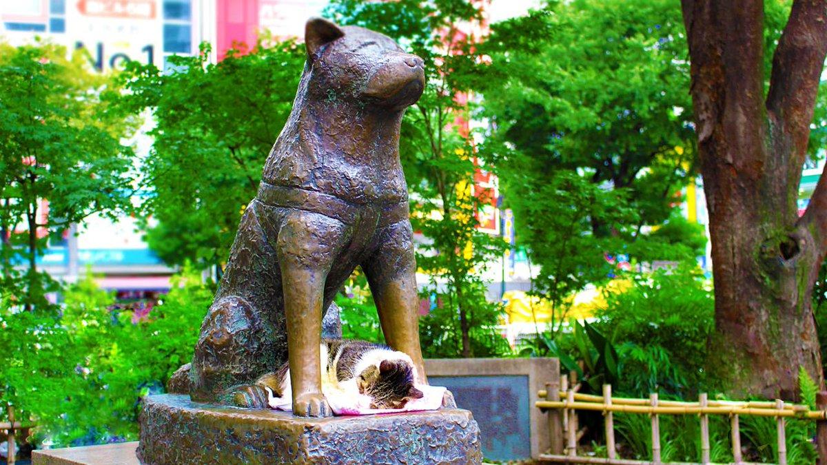 مجسمه هاچیکو در ژاپن