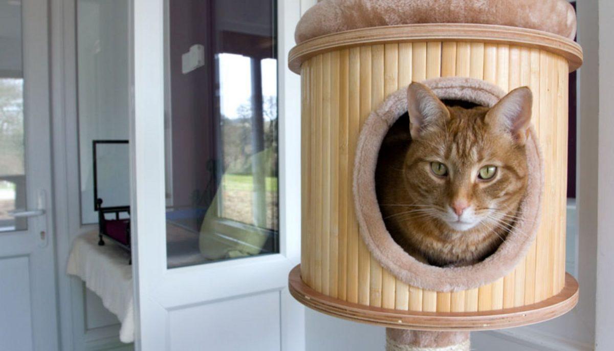 پانسیون گربه چیست؟