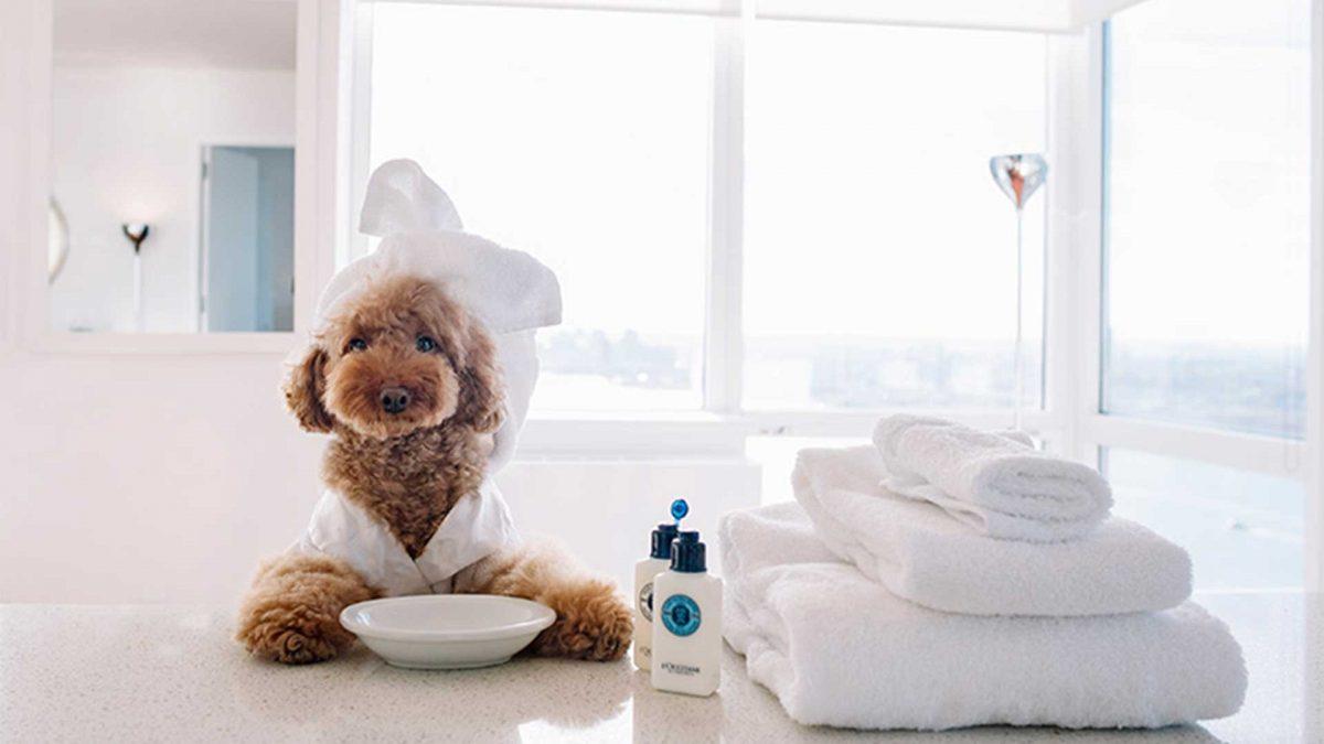 سگ پشمالو در هتل