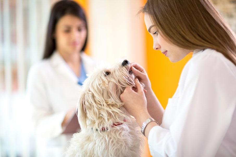 چکاپ سگ در بیمارستان و کلینیک دامپزشکی