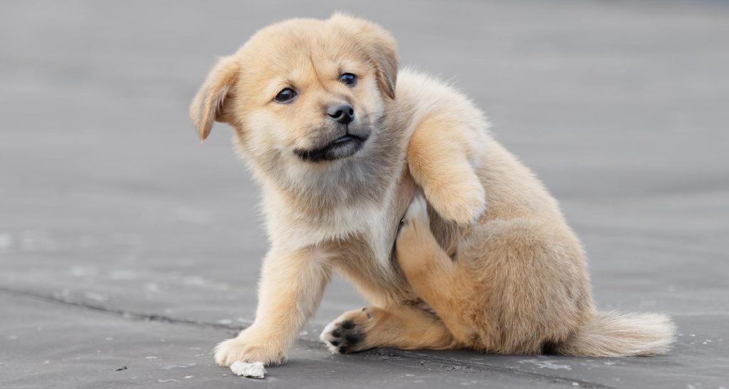 بیماری های توله سگ