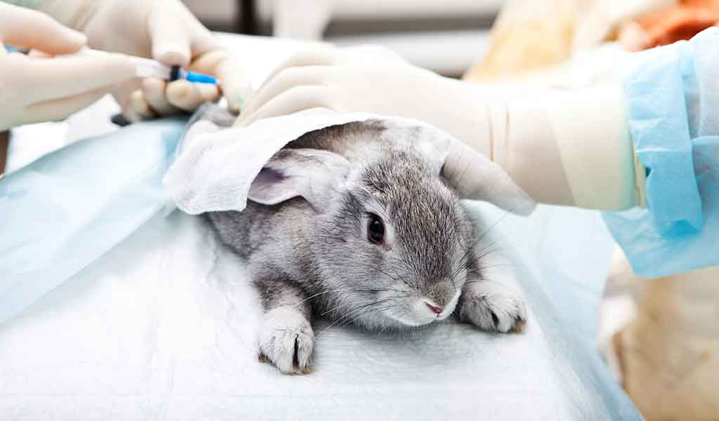 کلینیک دامپزشکی برای خرگوش