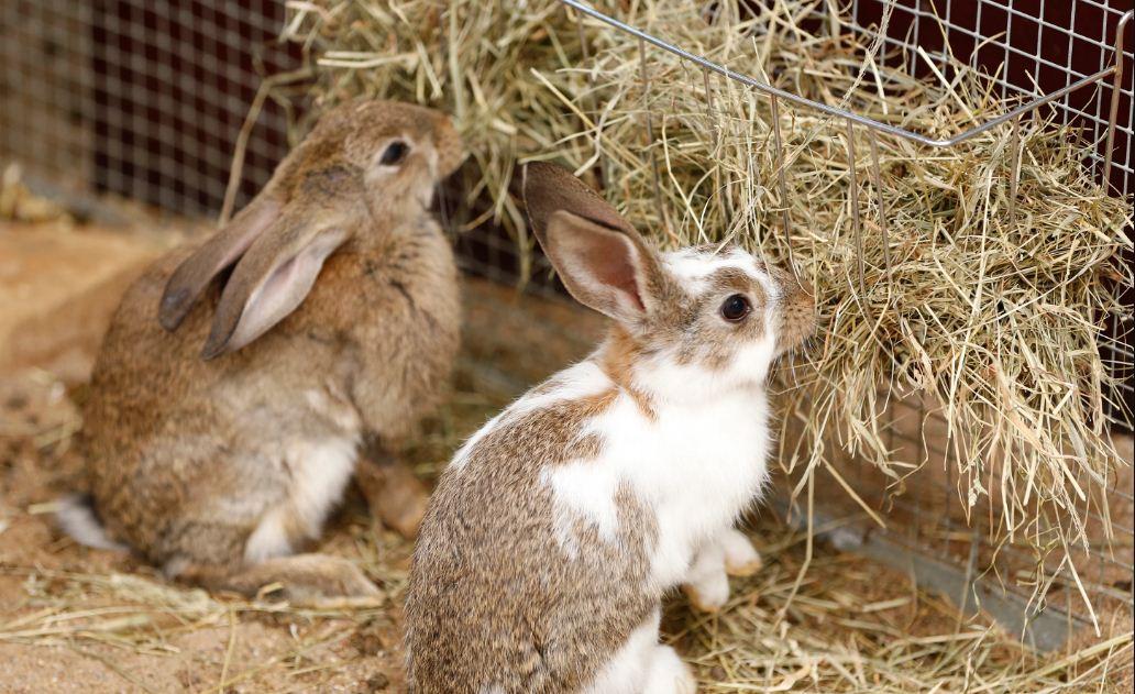یونجه مخصوص خرگوش