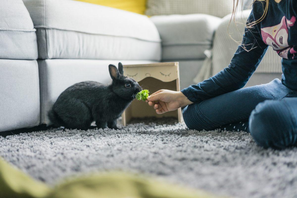 تربیت خرگوش