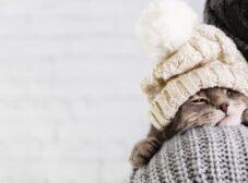 استفراغ کردن گربه ها؛ دلایل + تشخیص + درمان