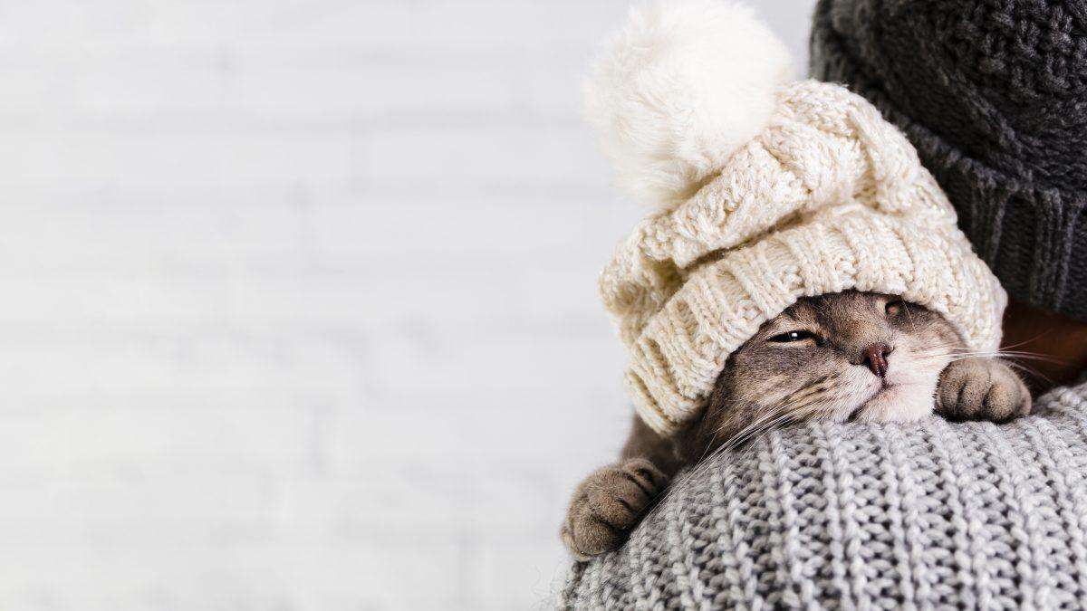 گربه با کلاه