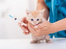 واکسیناسیون گربه (برنامه زمانی + واکسنهای ضروری)