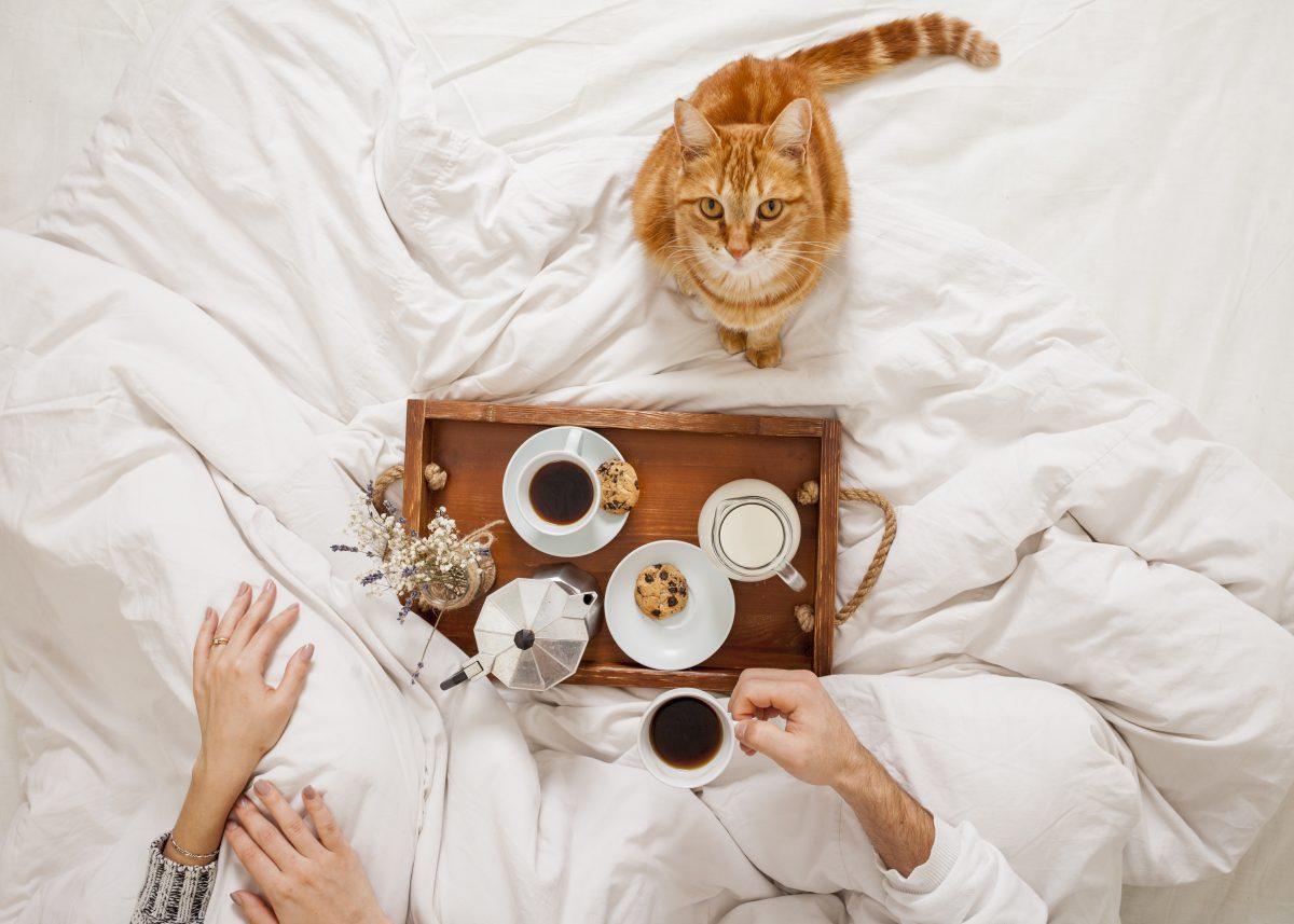 تغییر رژیم غذایی برای جلوگیری از استفراغ گربه