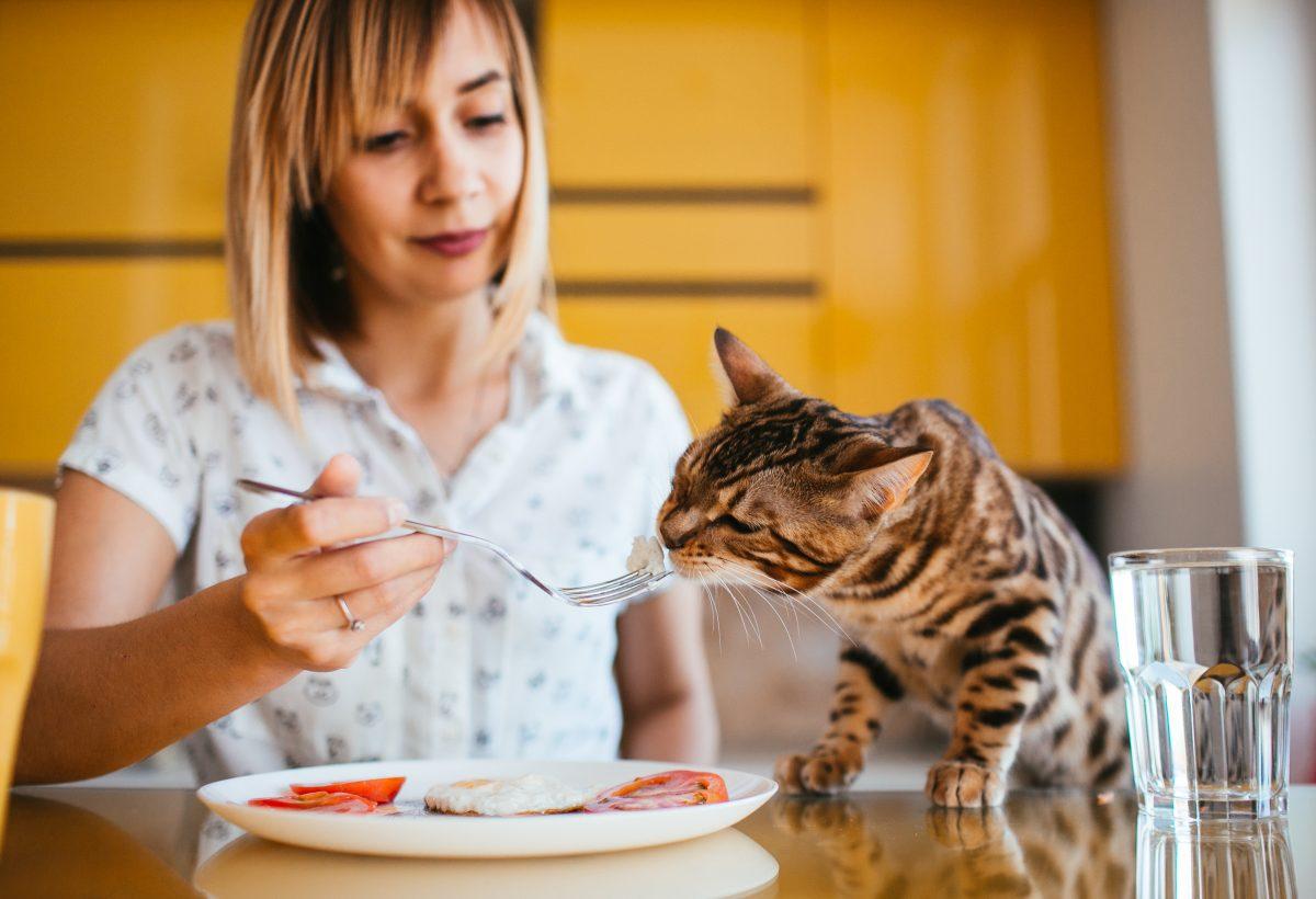 غذا دادن به گربه