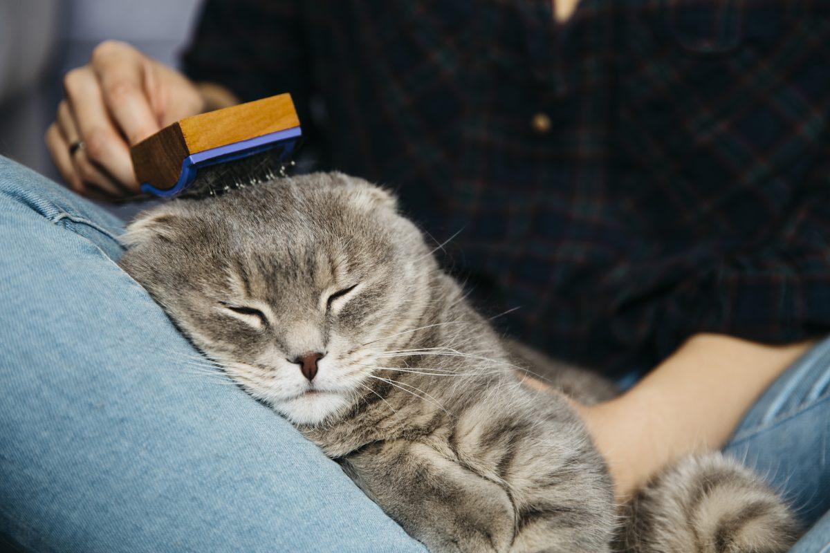 شانه زدن موی گربه