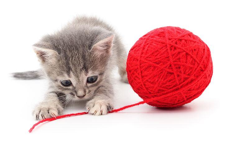 بازی گربه با نخ