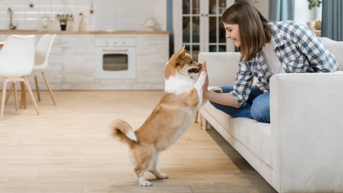 تربیت درست سگ