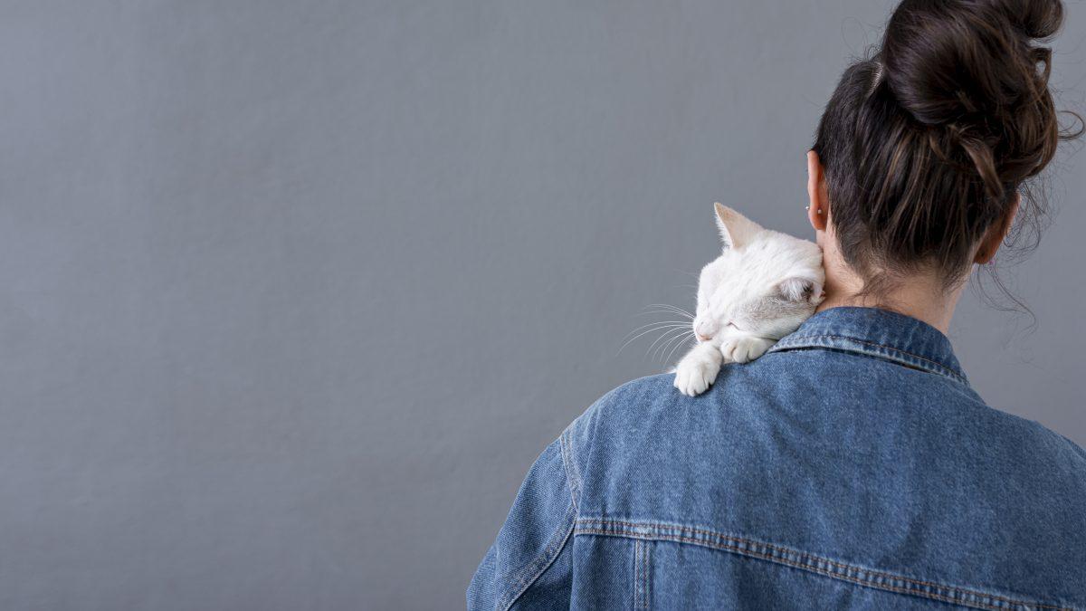 گربه سر شانه صاحبش