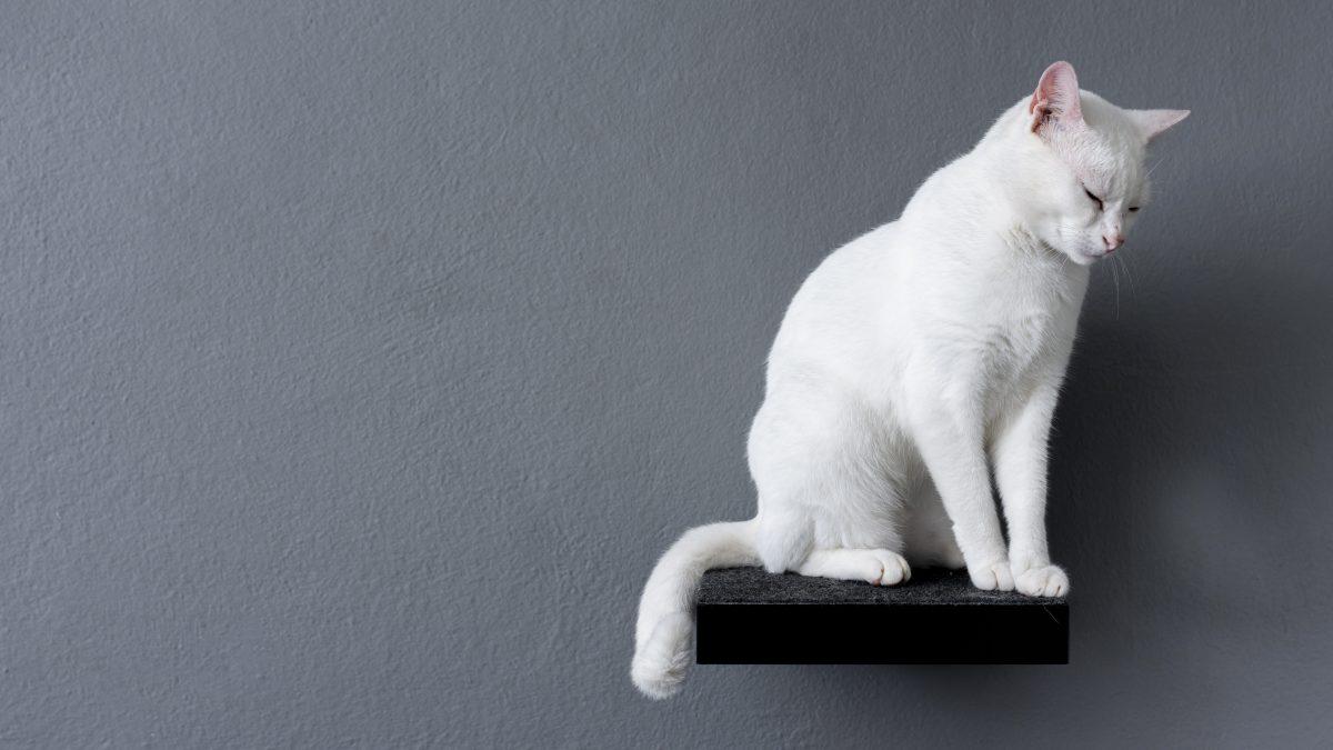 گربه سفید در قفسه