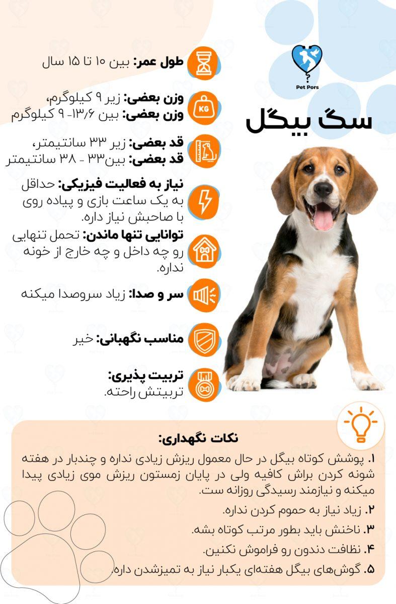 خصوصیات و نکات نگهداری نژاد سگ بیگل