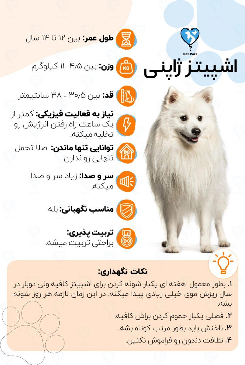 خصوصیات و نکات نگهداری نژاد سگ اشپیتز ژاپنی