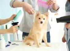 راهنمای شستشو و اصلاح سگ خانگی
