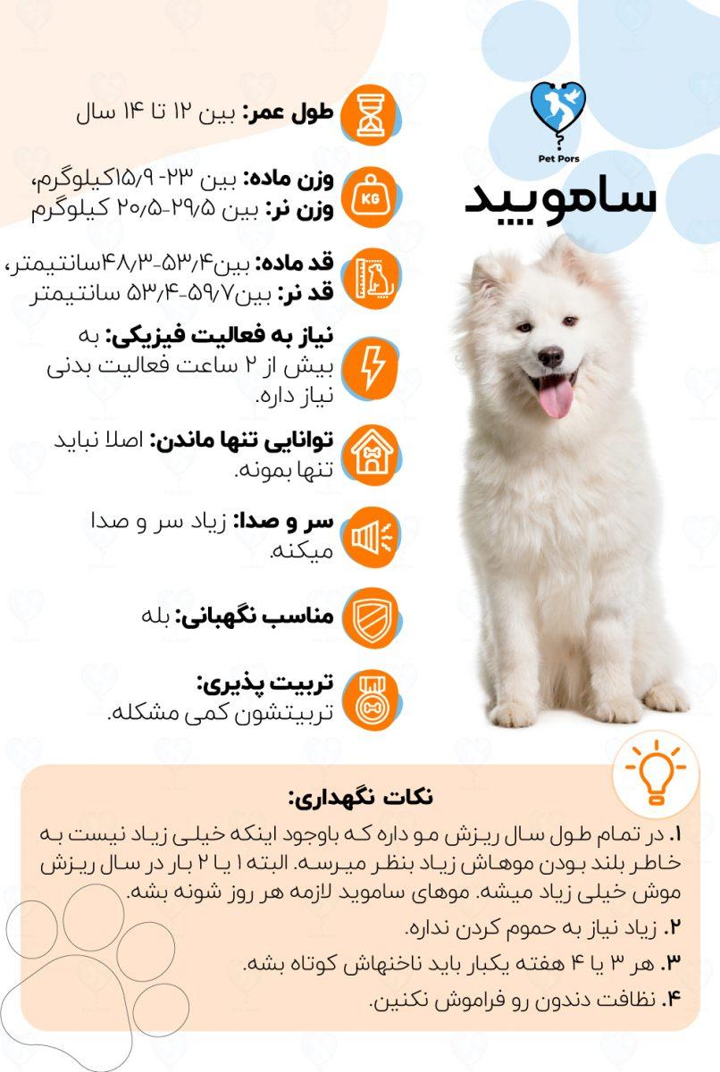 اینفوگرافی نژاد سگ سامویید