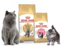 غذای گربه رویال کنین (دستهبندی محصولات و راهنمای خرید)