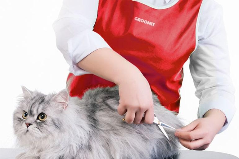کوتاه کردن موی گربه با قیچی