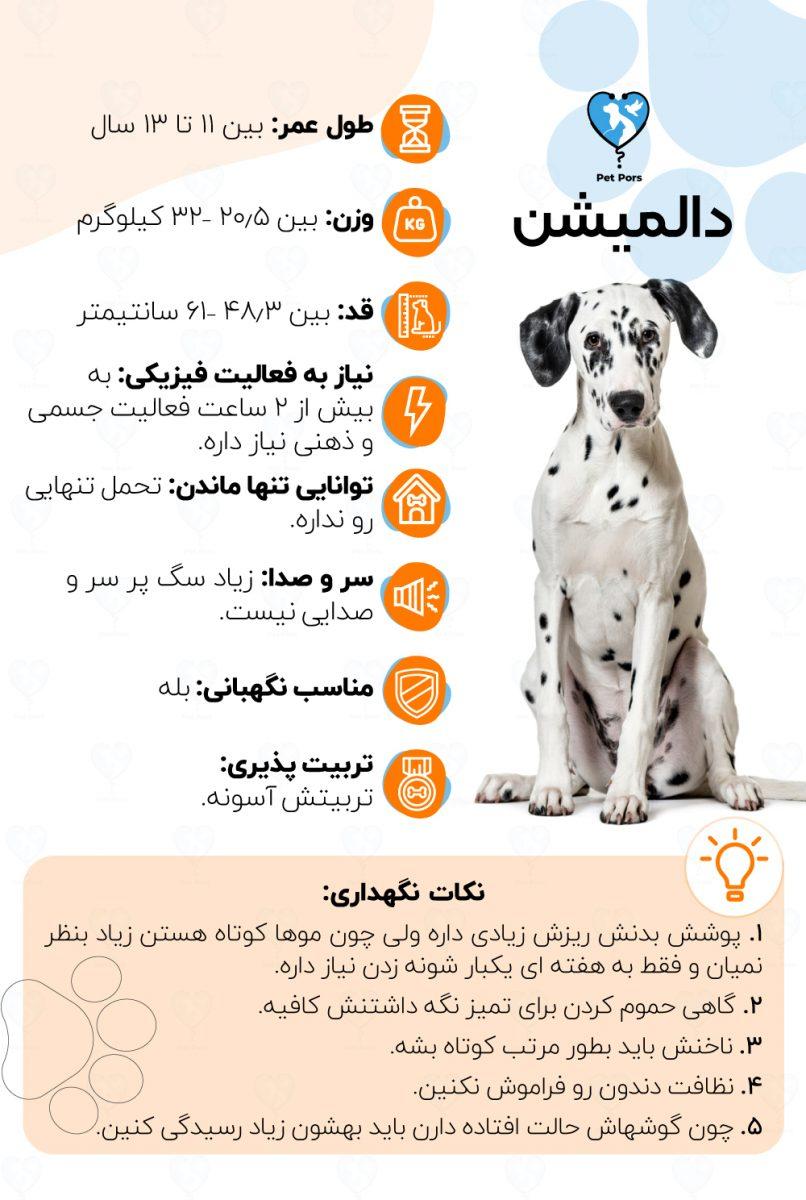 خصوصیات و نکات نگهداری نژاد سگ دالمیشن