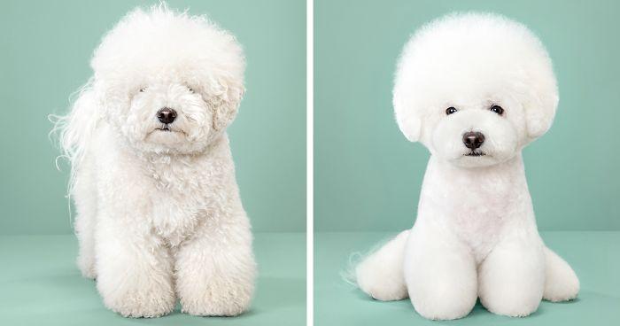 مدل مو سگ