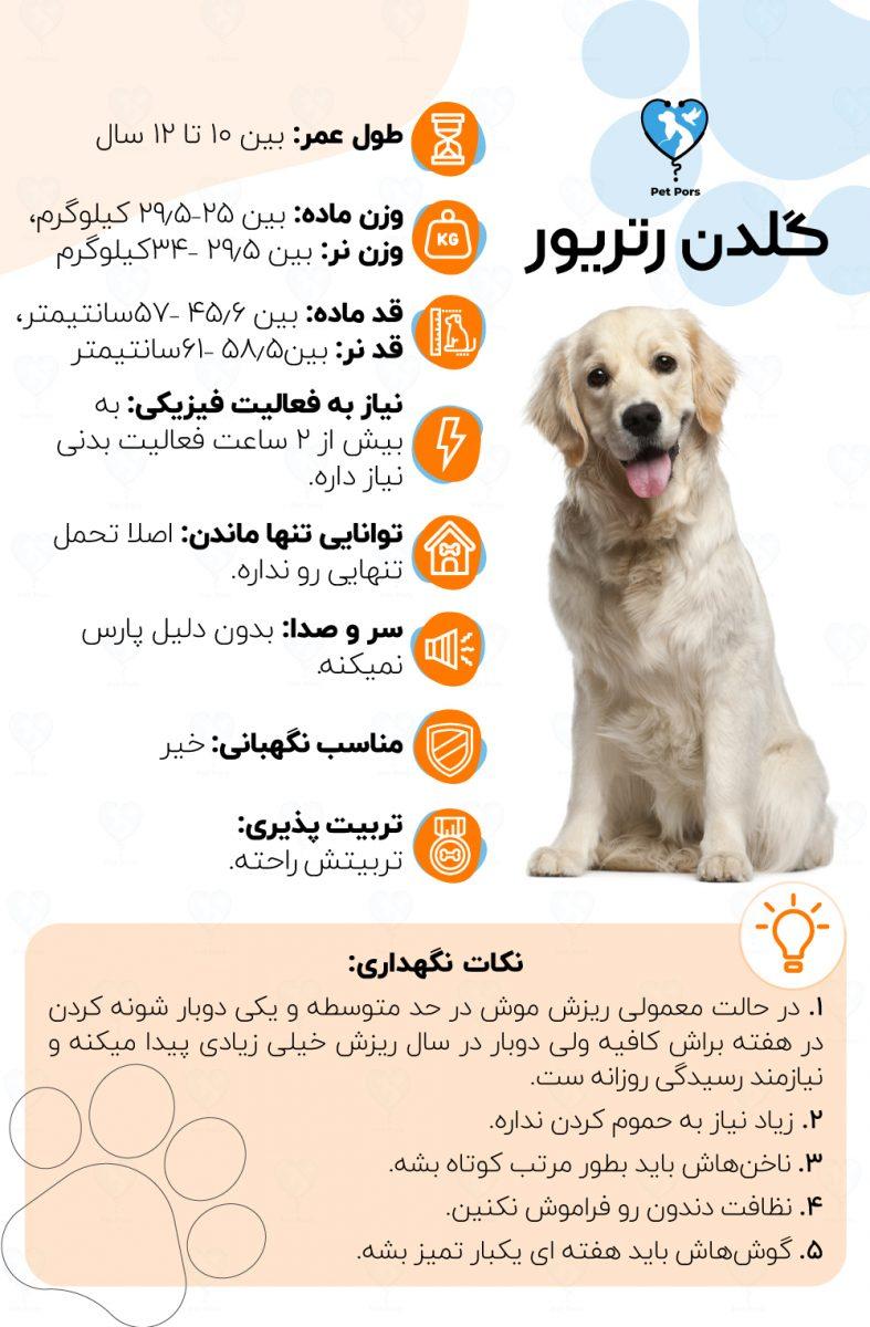 مشخصات و نکات نگهداری سگ گلدن رتریور