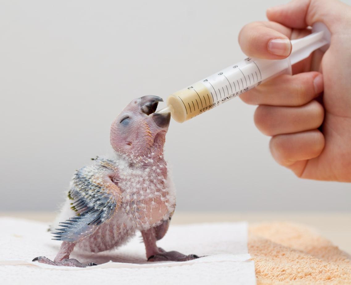 سرلاک دادن به پرنده