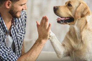 نحوه مراقبت از سگ