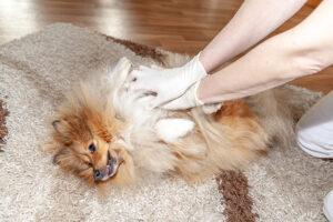 کمک های اولیه سگ