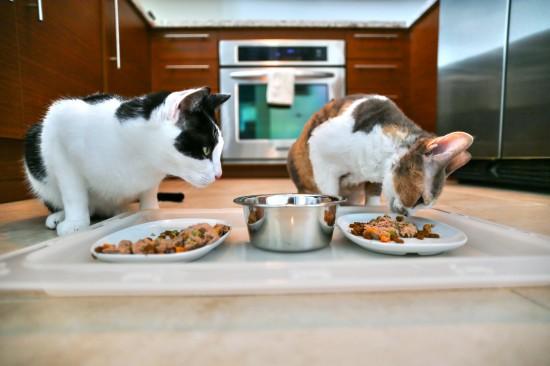 برنامه غذایی گربه