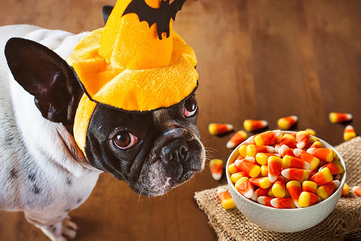 مواد غذایی خطرناک برای سگ