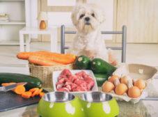طرز تهیه غذای خانگی برای سگ ها و نکات مهم تغذیهای