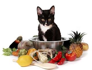 دستور غذای خانگی گربه