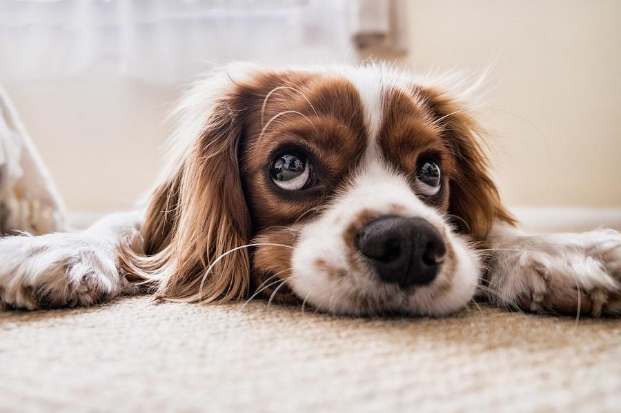 علائم حساسیت سگ به سویا