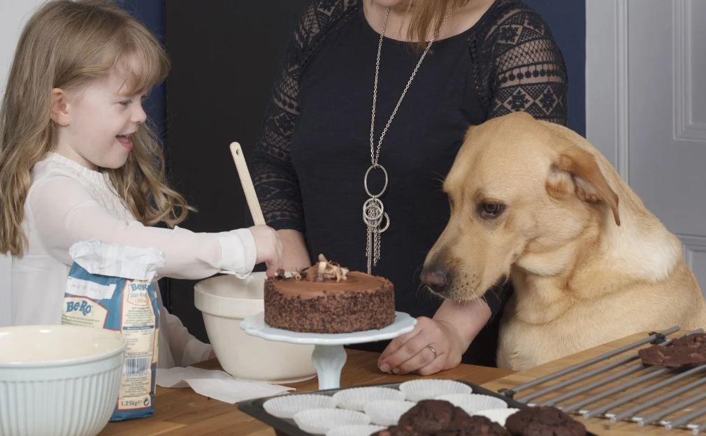 مواد غذایی مضر برای سگ