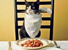 راهنمای تهیه غذای خانگی برای گربه