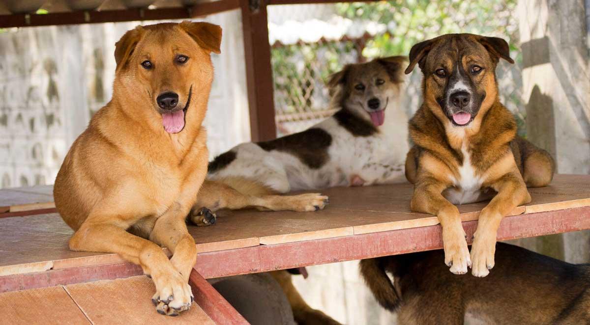 مراکز رایگان برای واگذاری سگ در تهران