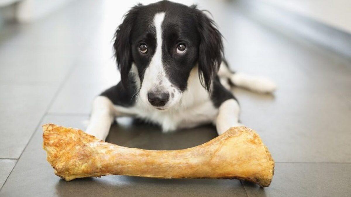 استخوان برای سگ خوبه؟