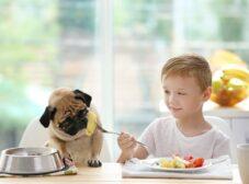 آیا سیب زمینی برای سگ مفید است؟