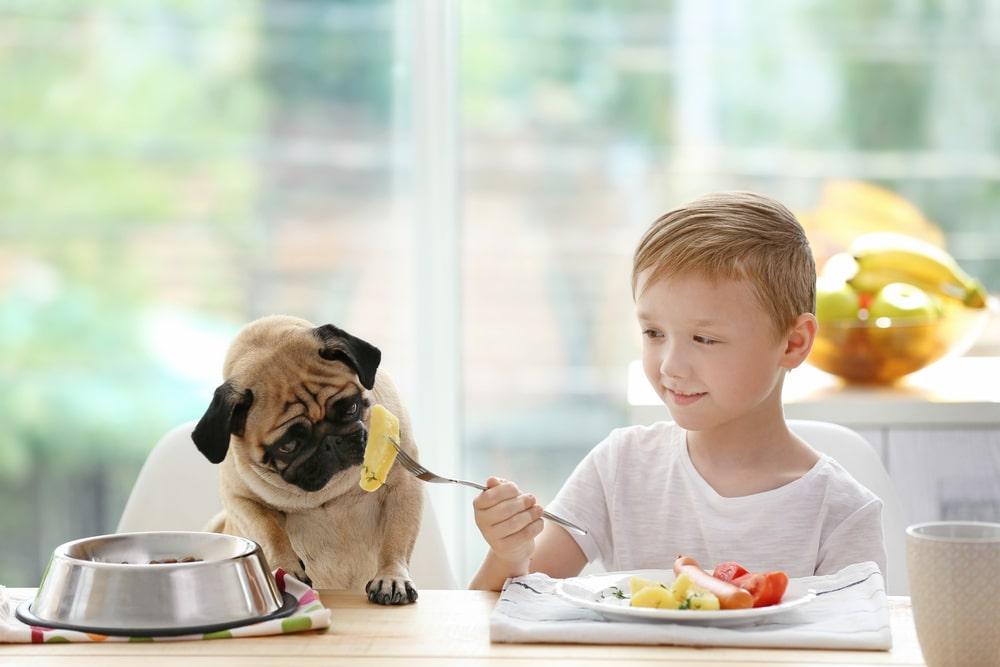 سیب زمینی برای سگ