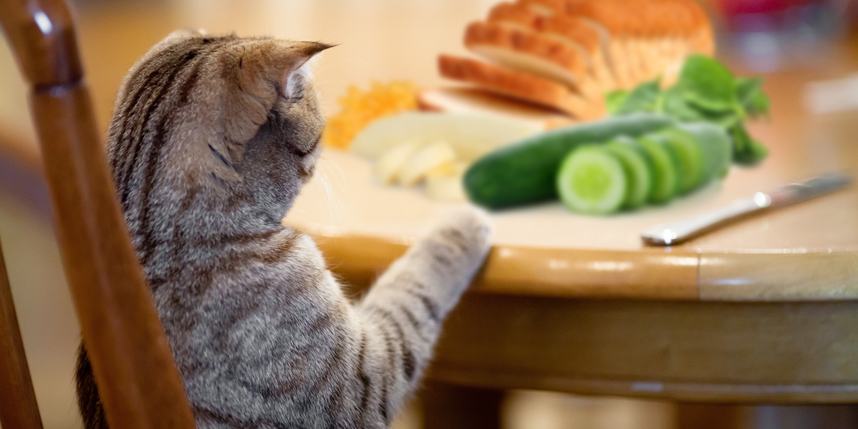 سبزیجات مفید برای گربه