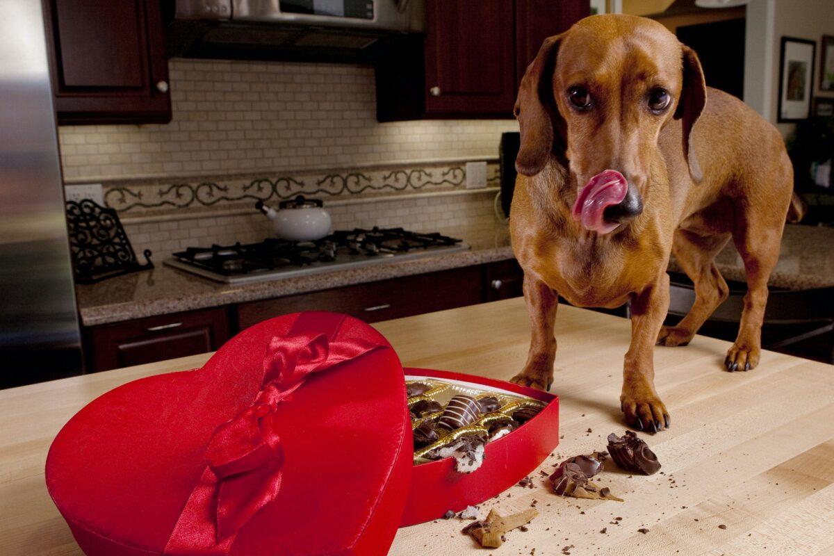 خوردن شیرینی توسط سگ