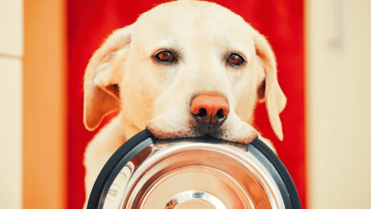 سگ با ظرف غذا در دهانش