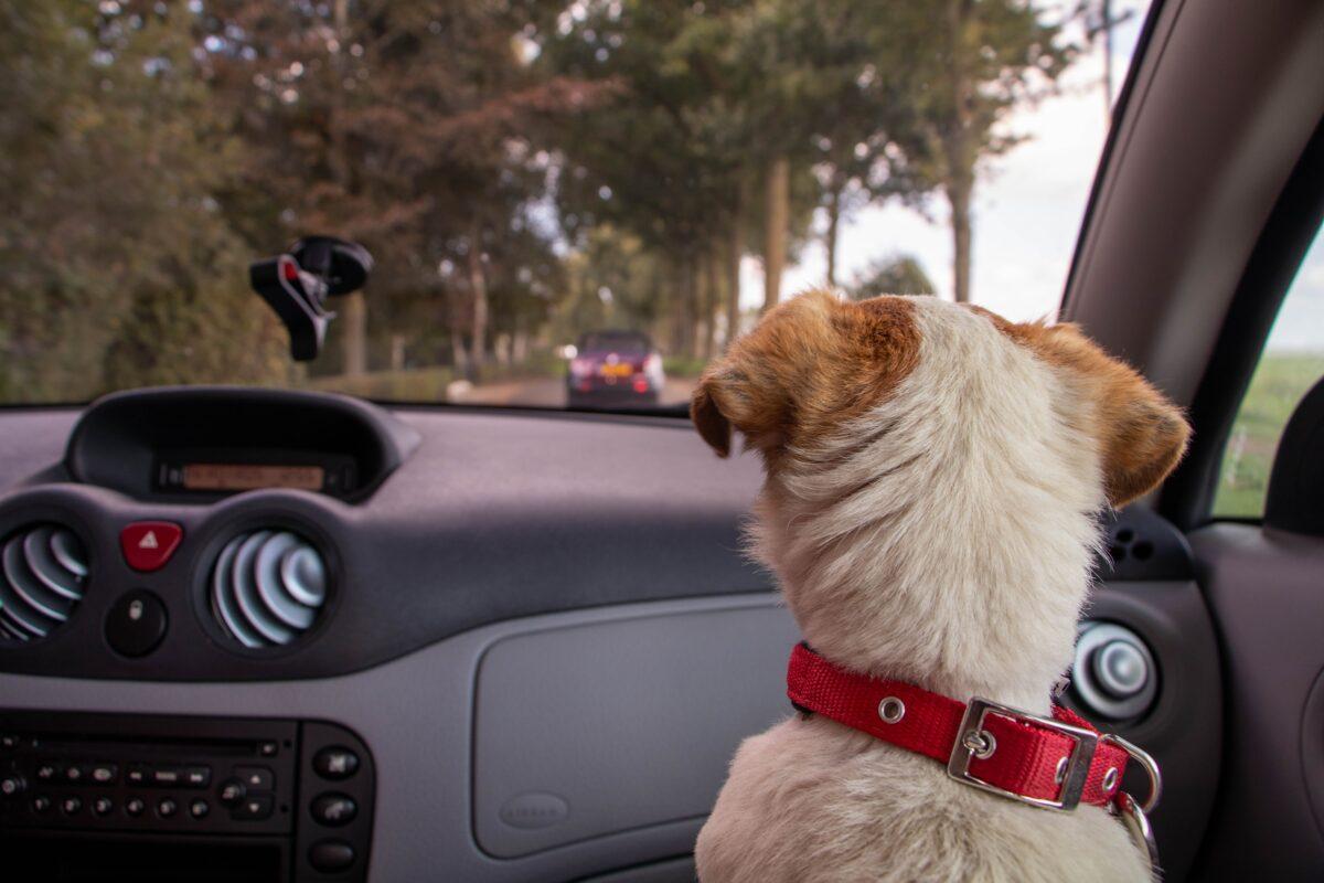 گرمازدگی حیوانات در ماشین