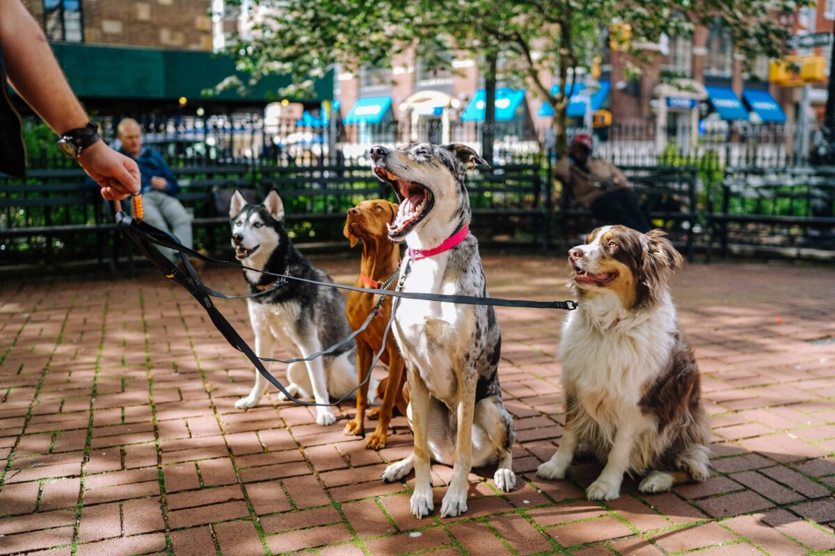 جلوگیری از گرمازدگی سگ بیرون از خانه
