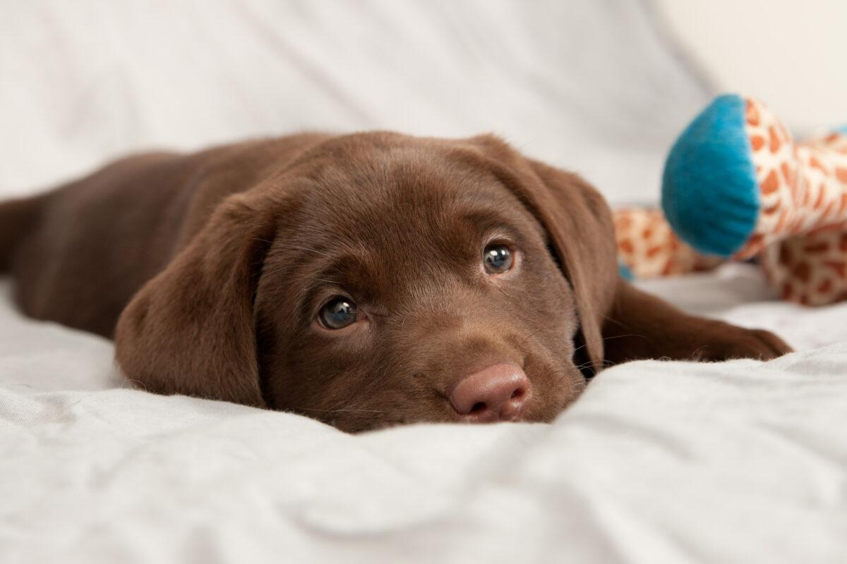 علائم مسمومیت در سگ