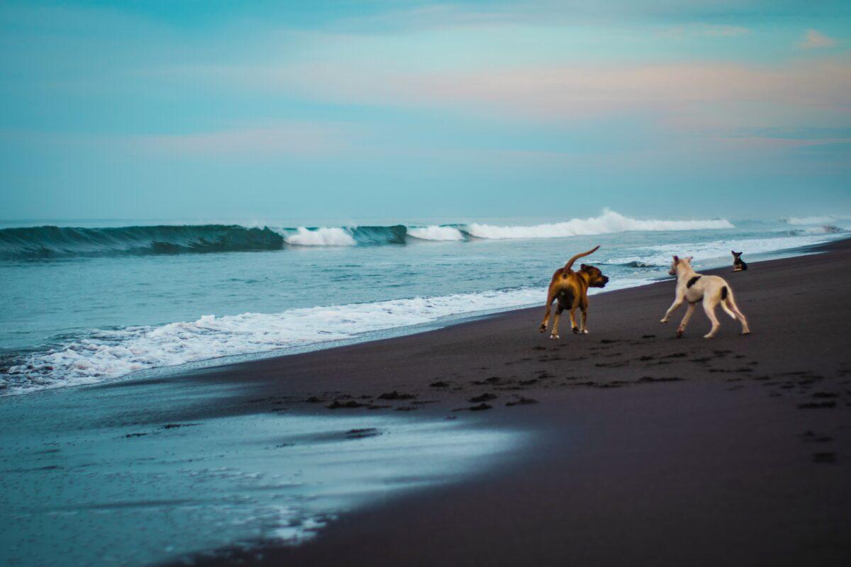 بازی کردن سگ در محیط ساحلی