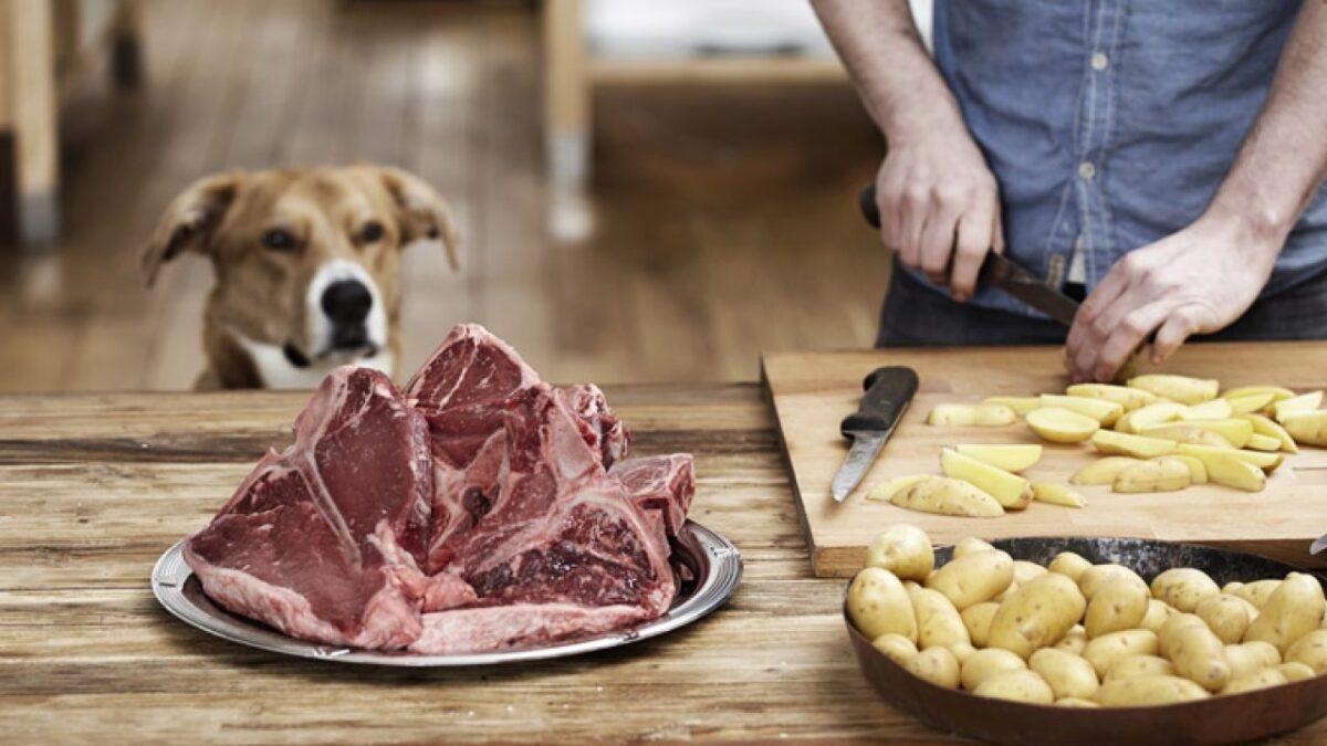 سیب زمینی خام برای سگ
