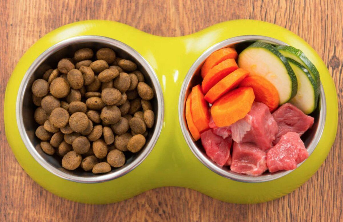 غذای خانگی سگ یا غذای تجاری